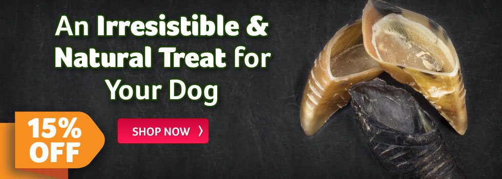 An Irresistible and Natural Treat for Your Dog
